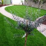 drumcondra garden Decking