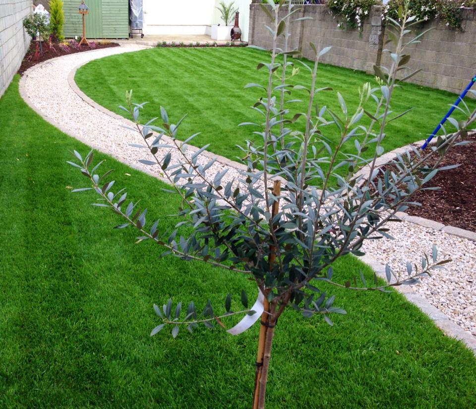Drumcondra garden design for Garden designs ie
